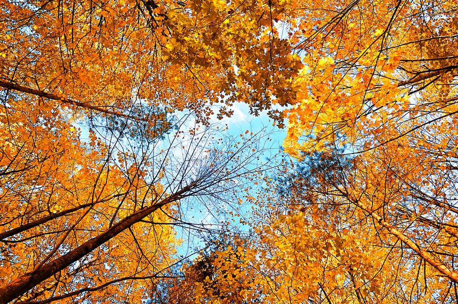 4 Skin Care Tips for Autumn